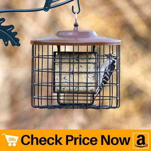 Stokes Select Squirrel-X Squirrel Proof Suet Bird Feeder