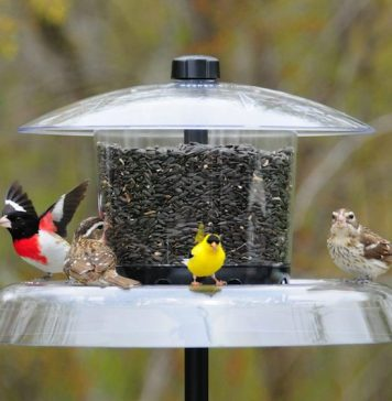 Best Squirrel Proof bird Feeder Reviews