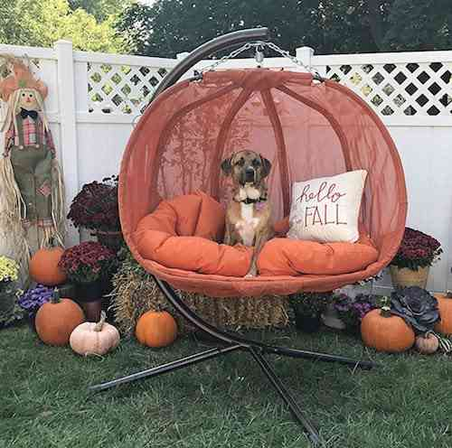 Flower House FHPC100-OR Hanging Pumpkin Loveseat Chair with Stand